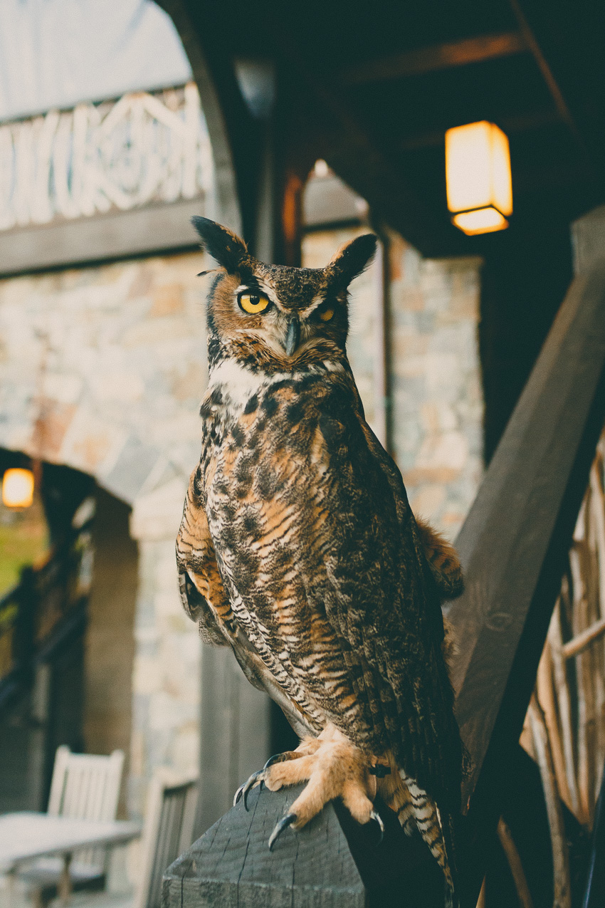 owl wedding lake placid lodge